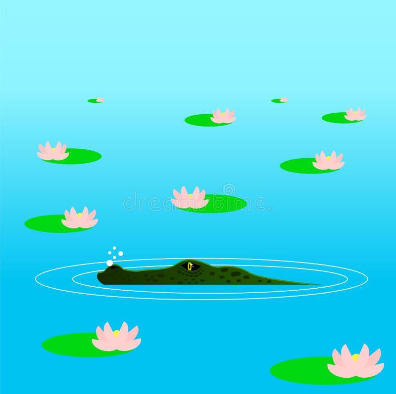 掩藏在埋伏的鳄鱼在水中在百合中 皇族释放例证