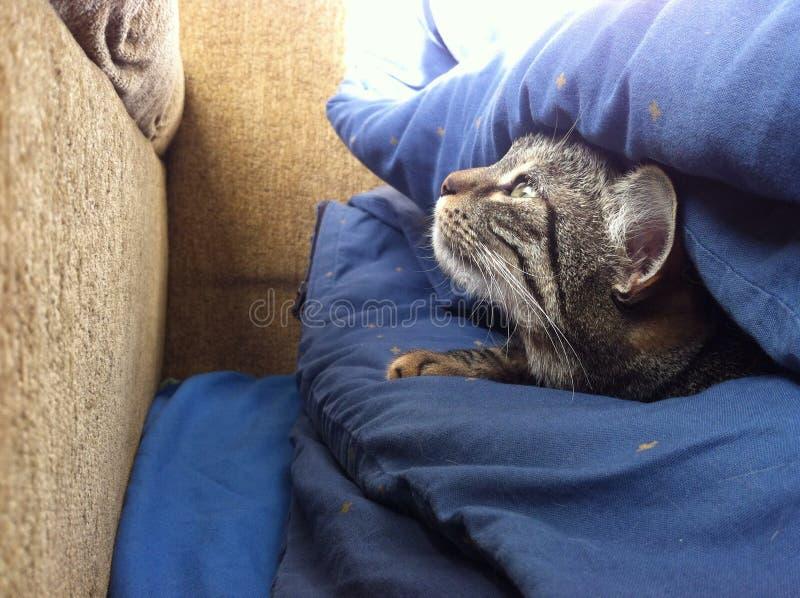 掩藏在床的逗人喜爱的猫 免版税库存图片