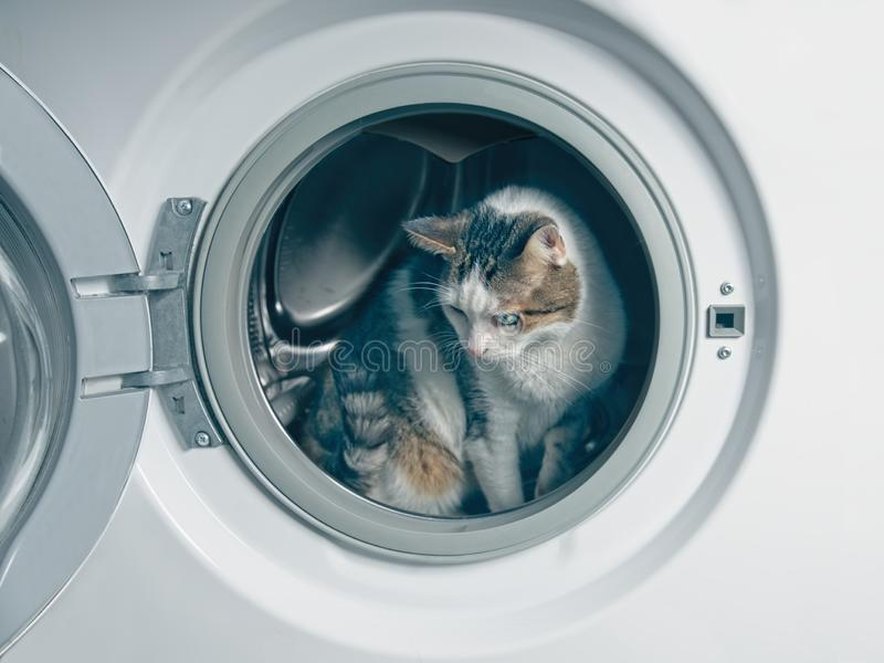 掩藏在洗衣机的逗人喜爱的虎斑猫 图库摄影