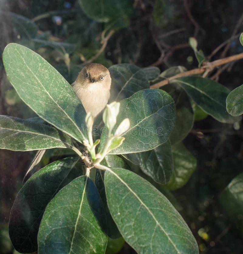 掩藏在灌木的微小的鸟调查窗口 免版税图库摄影