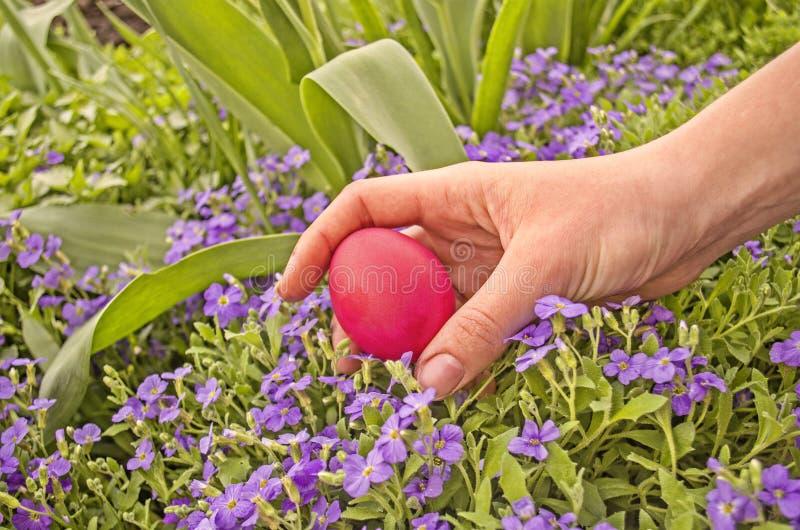 掩藏在草红色复活节彩蛋 免版税库存照片