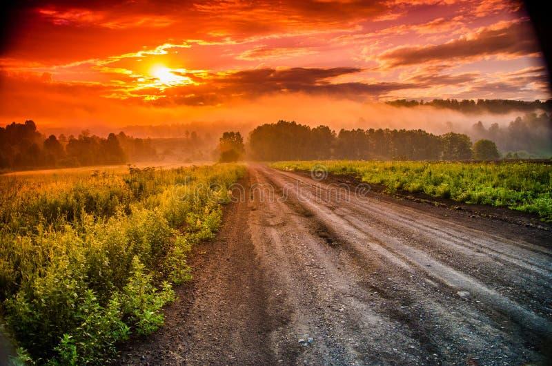 ?? 掩藏在雾的森林 森林道路 免版税图库摄影