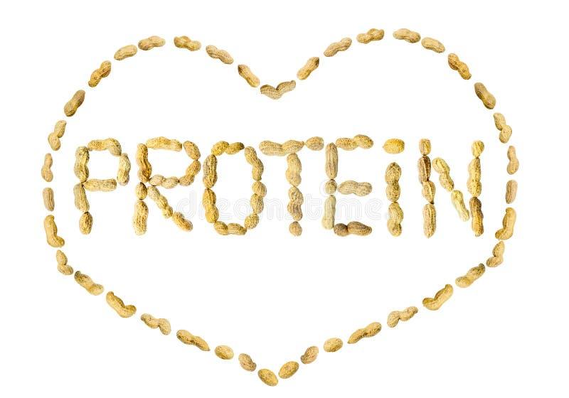 措辞蛋白质由在心脏构筑的花生信件做成 免版税图库摄影
