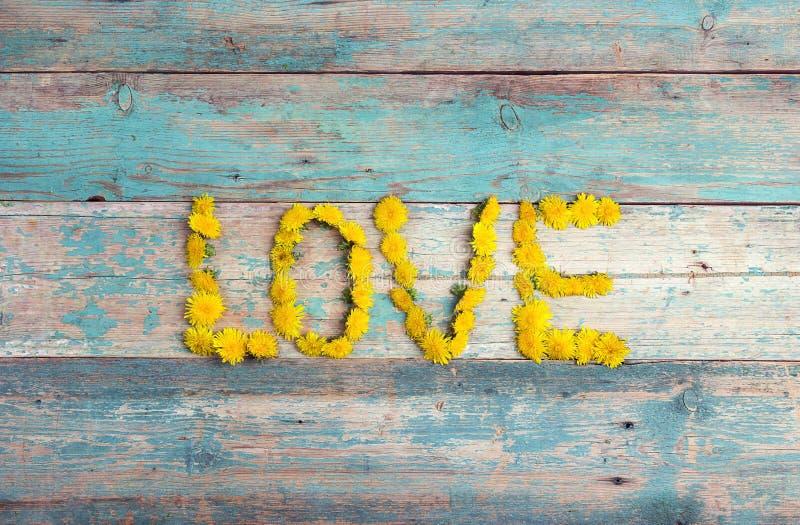 措辞`从黄色蒲公英的爱`在老绿松石木背景 免版税库存照片