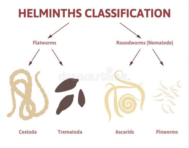 描述蠕虫的类图 皇族释放例证