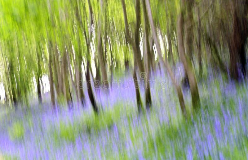 提取会开蓝色钟形花的草 库存图片