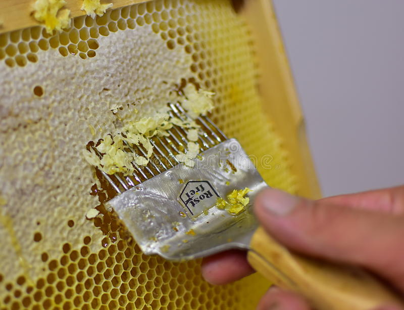 提取蜂蜜,古板的方式 库存图片