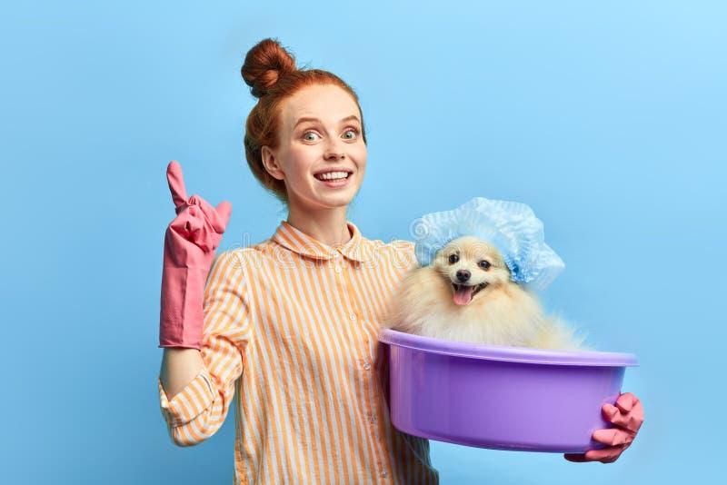 提建议的美丽的姜宠物所有者如何照顾狗 库存照片