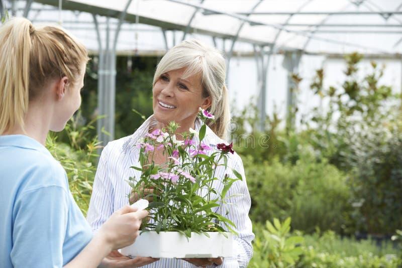 提植物建议的职员女性顾客在园艺中心 库存图片