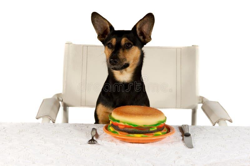 插孔罗素表狗 免版税库存照片