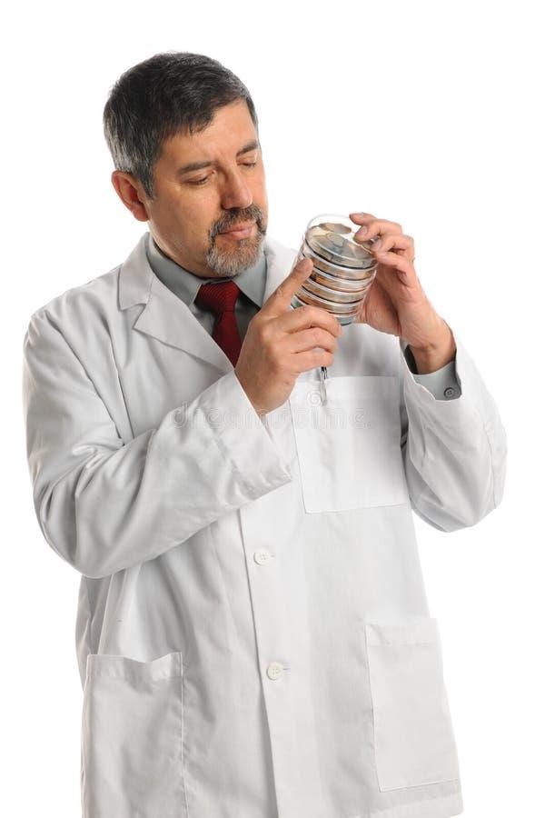 握在培养皿的西班牙科学家细菌 库存照片