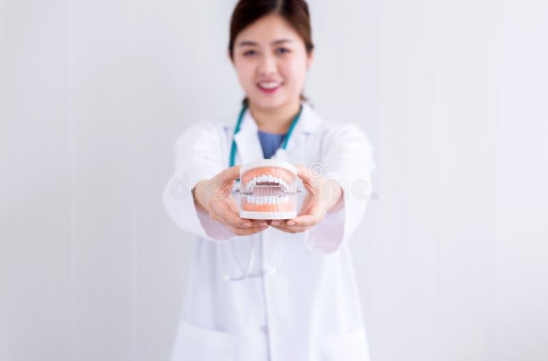 握塑料牙的医生亚裔妇女塑造,口头和牙齿健康的概念 库存图片