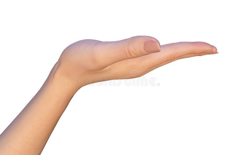握妇女的空的手 免版税库存图片