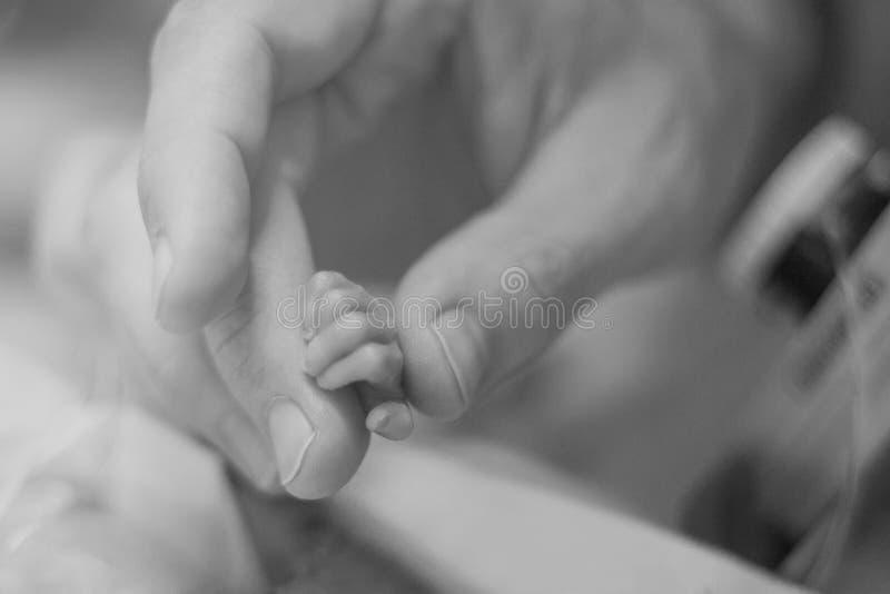握早产婴孩手的父亲 库存照片
