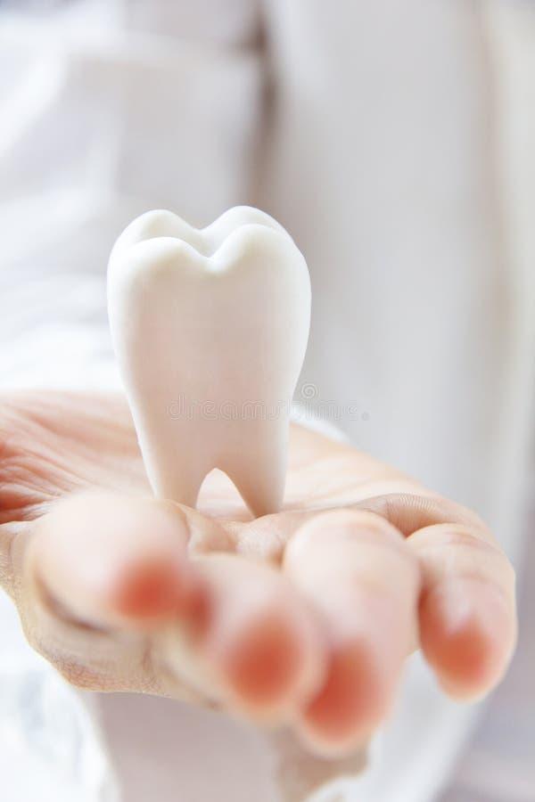 握槽牙的牙科医生 库存图片