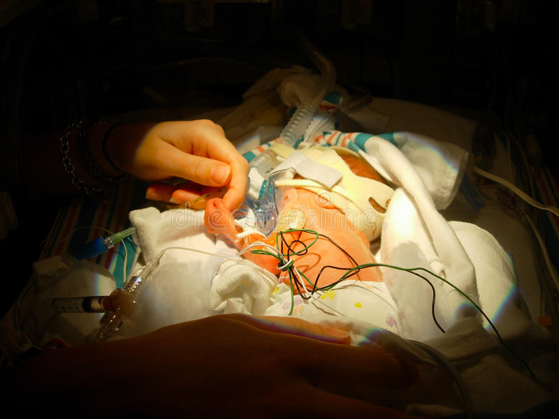 握母亲手指的早产儿 库存照片