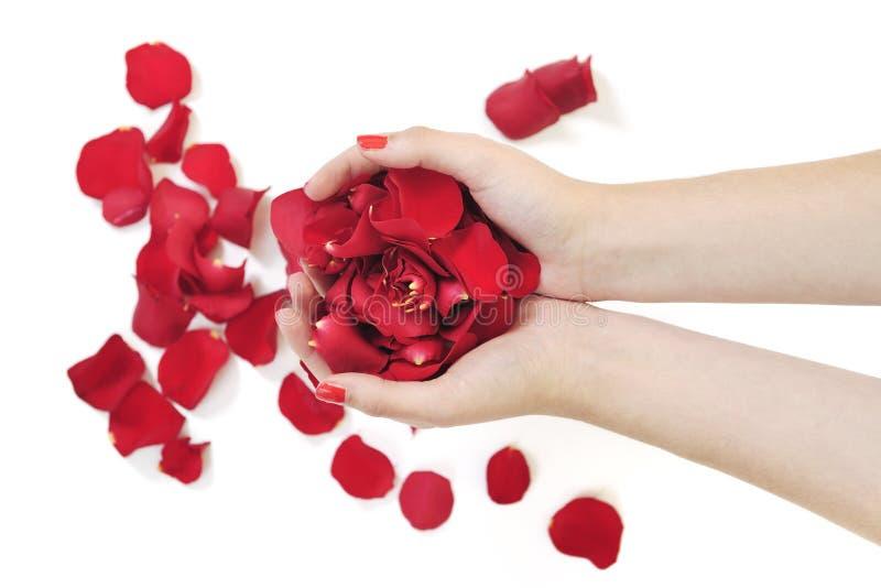 握玫瑰花瓣的妇女现有量 库存照片