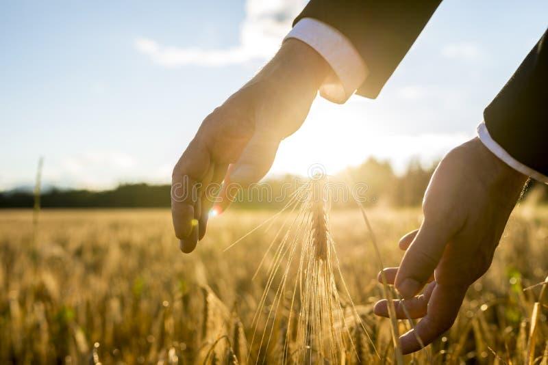 握他的手的商人在麦子的耳朵附近 库存照片