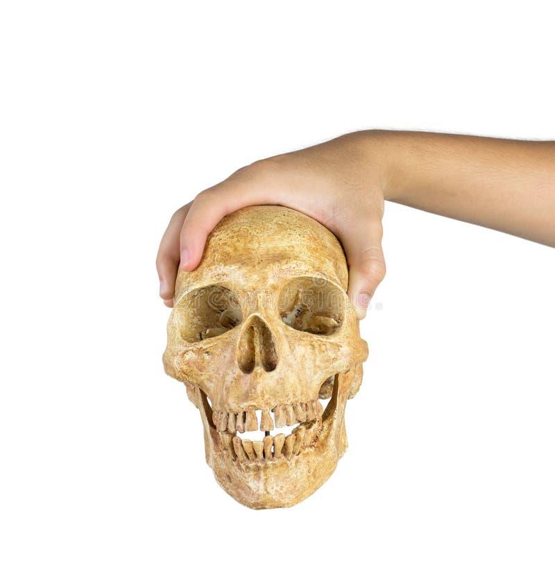 握头骨的手被隔绝在白色背景 免版税库存图片