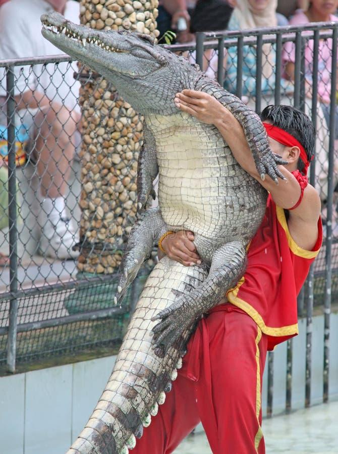 搏斗的鳄鱼 库存照片