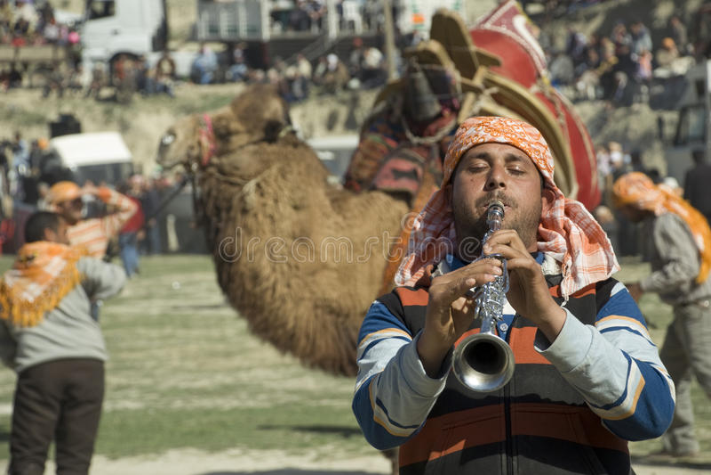搏斗骆驼的音乐家 图库摄影