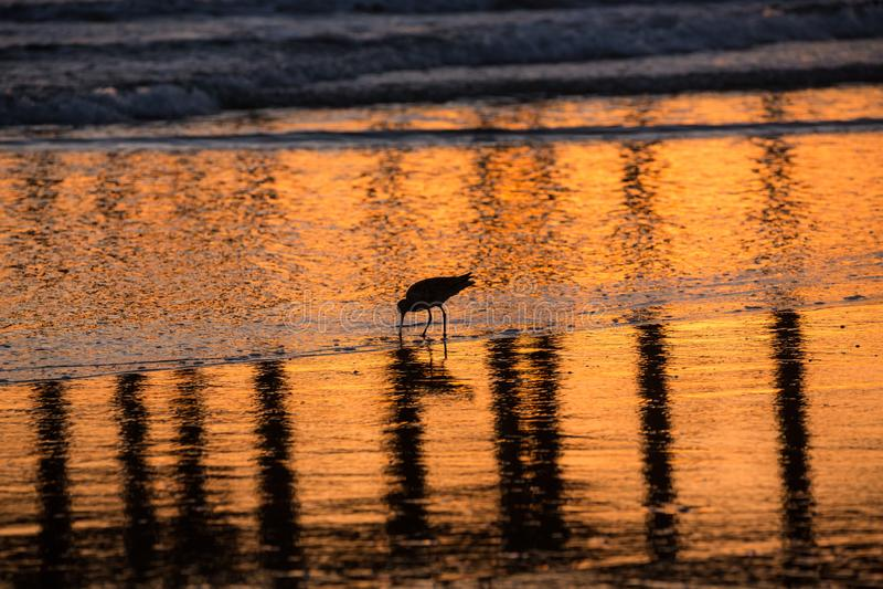 搜寻在外出的浪潮的食物的水鸟的剪影和反射 免版税库存图片