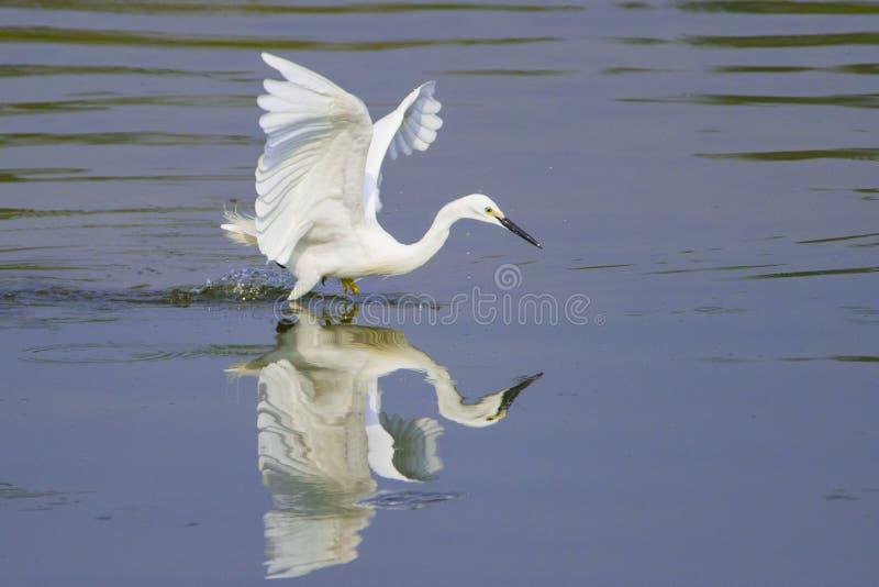 搜寻在池塘 免版税库存照片
