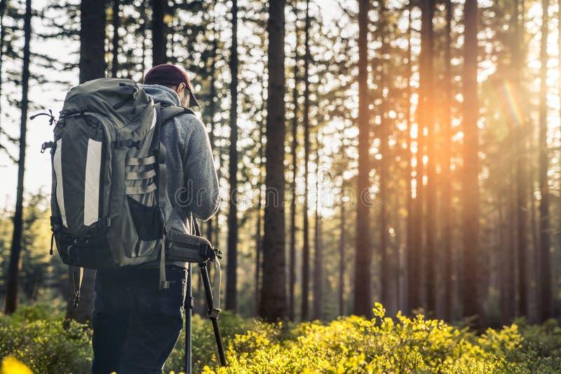摄影师在沈默森林里在春天拍一张照片有bea的 库存图片