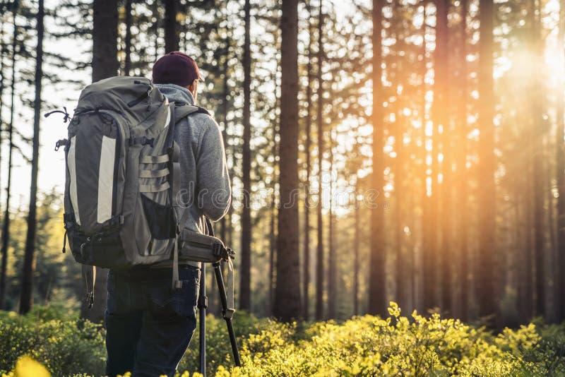 摄影师在沈默森林里在春天拍一张照片有bea的 库存照片