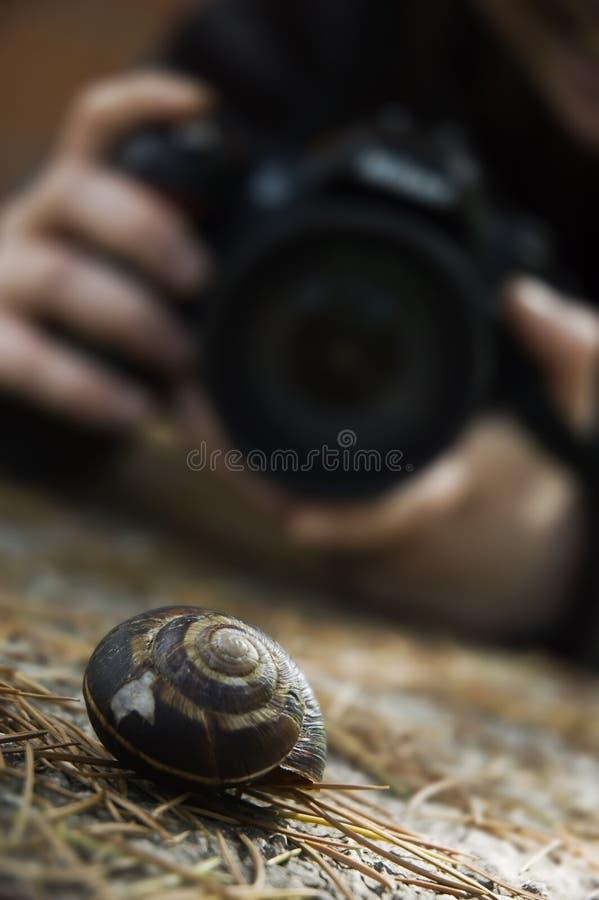 摄影师蜗牛 免版税库存照片