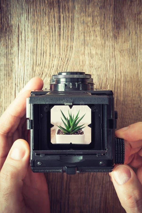 摄影师递拿着古色古香的照相机和射击多汁植物 库存照片