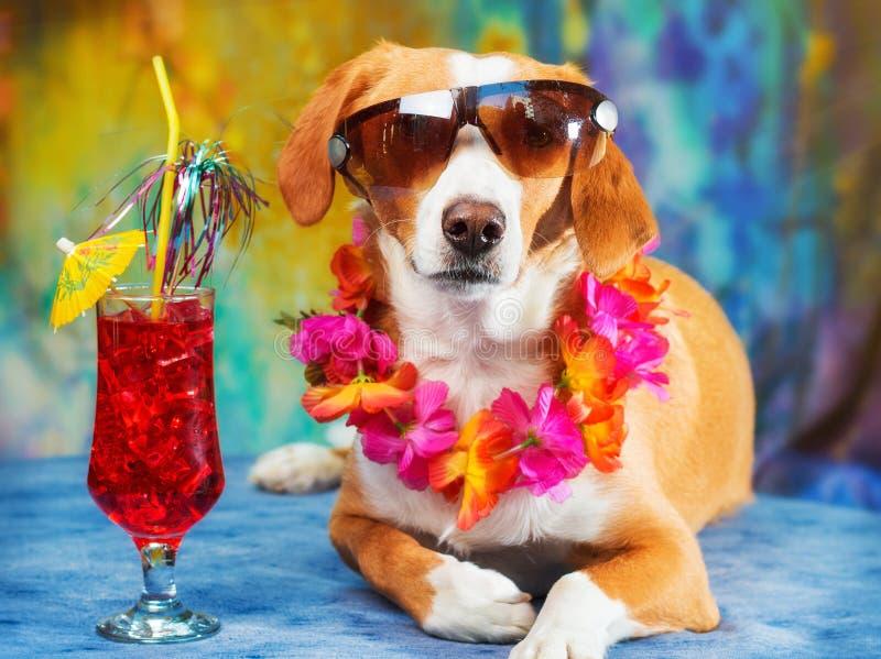 摆在作为游人的可爱的混杂的品种狗 图库摄影