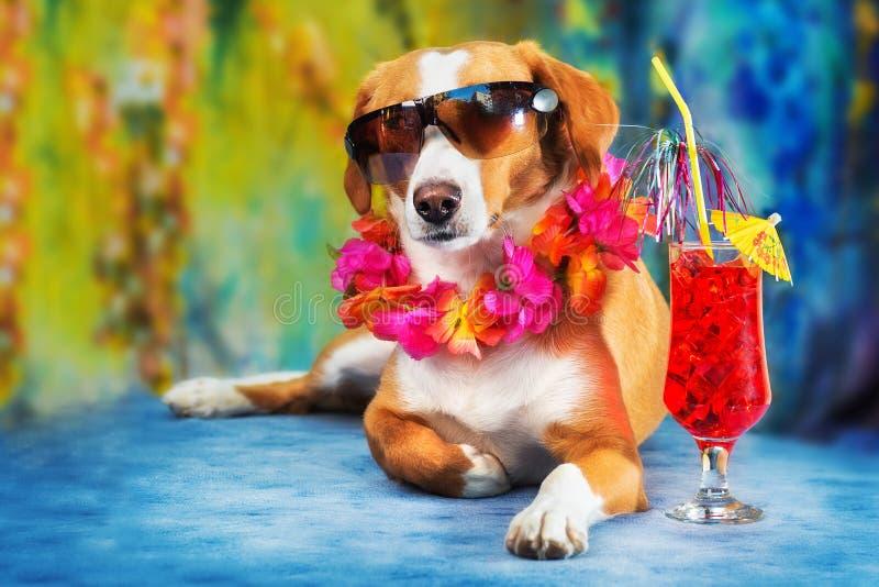 摆在作为游人的可爱的混杂的品种狗 免版税库存图片