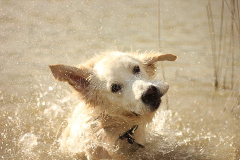 摆脱水的奥斯卡 免版税库存照片