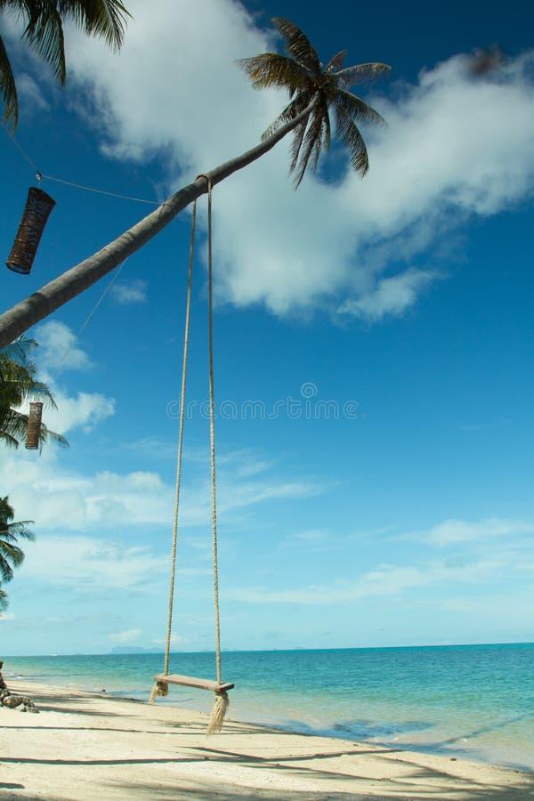 摇摆从椰子树的吊在海滩, Samui海岛 免版税库存照片
