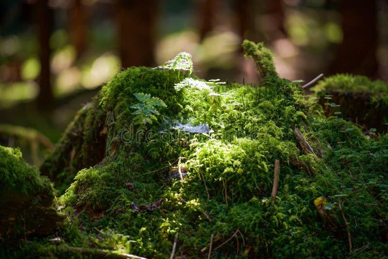 摇摆在蜘蛛网的少许阳光 库存图片