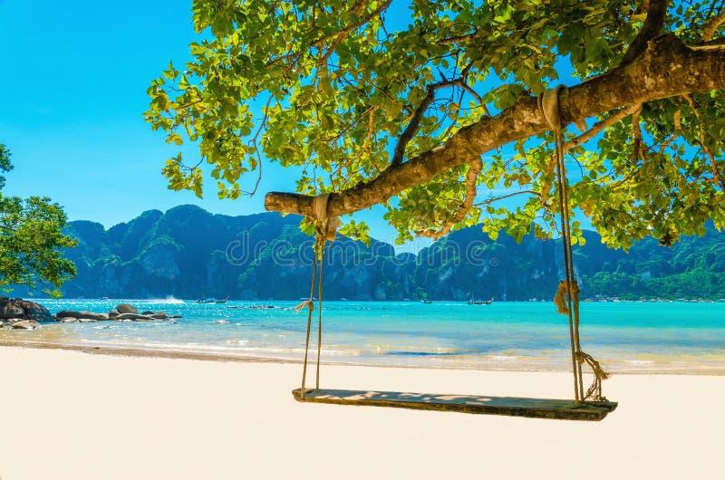 摇摆从椰子树的吊在海滩,泰国 库存照片