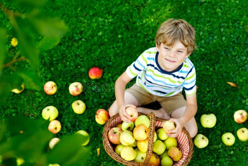 摘和吃在有机农场,秋天的美丽的白肤金发的愉快的孩子男孩红色苹果户外 滑稽的小的幼儿园 库存图片