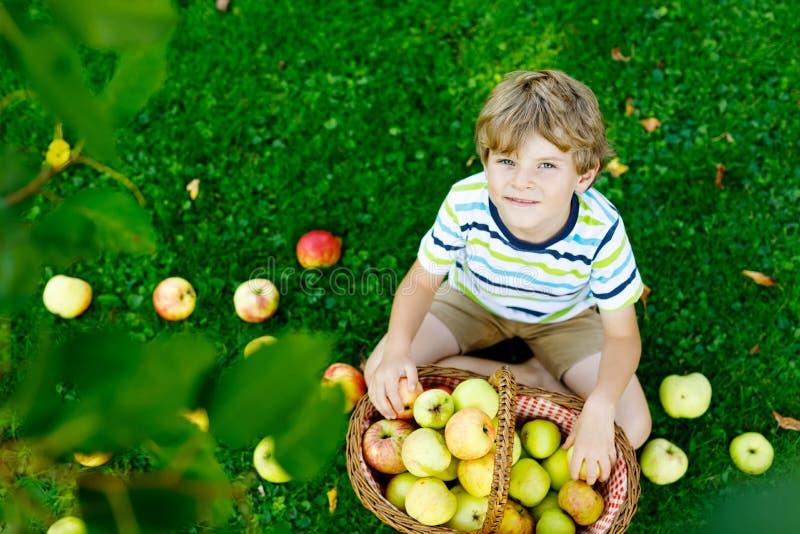 摘和吃在有机农场,秋天的美丽的白肤金发的愉快的孩子男孩红色苹果户外 滑稽的小的幼儿园 免版税图库摄影