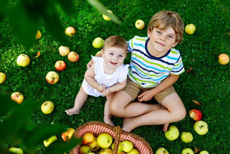 摘在一个农场的两个孩子苹果在早期的秋天 小使用在苹果树果树园的女婴和男孩 孩子采撷 库存图片