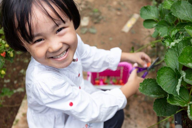 摘新鲜的草莓的亚裔矮小的中国女孩 图库摄影