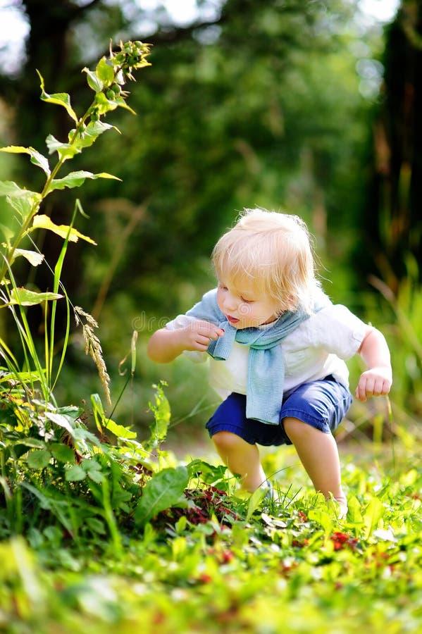 摘甜野草莓的小孩在国内庭院里 免版税库存图片