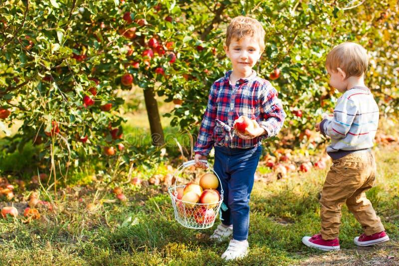 摘苹果的两个逗人喜爱的孩子在庭院里 库存照片