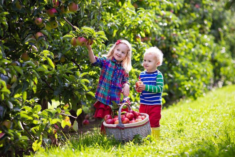 摘苹果的孩子在果子庭院里 免版税库存照片