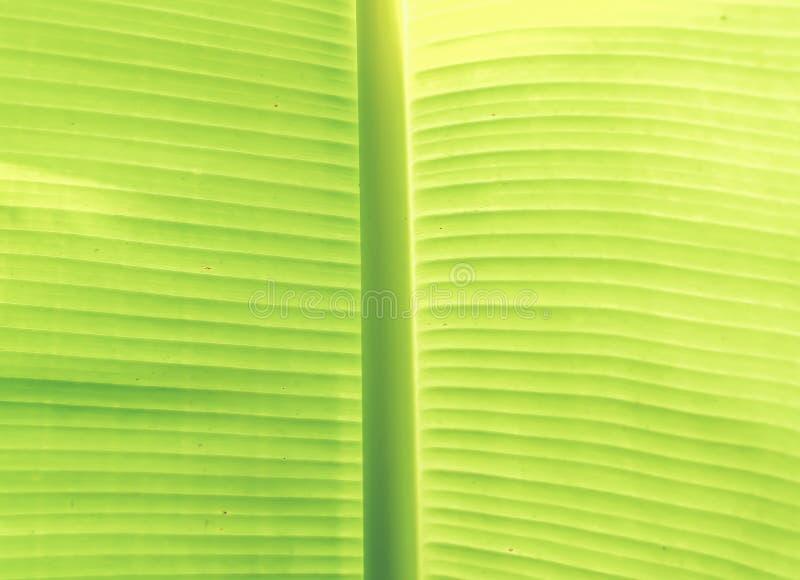 摘要叶子绿色背景 构造背后照明新鲜的绿色叶子背景  自然想法 免版税库存图片