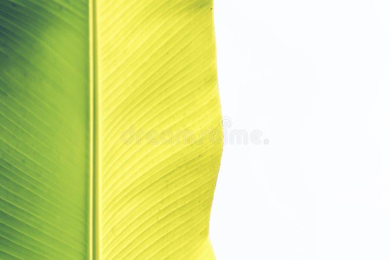 摘要叶子绿色背景 构造背后照明新鲜的绿色叶子背景  自然想法 图库摄影