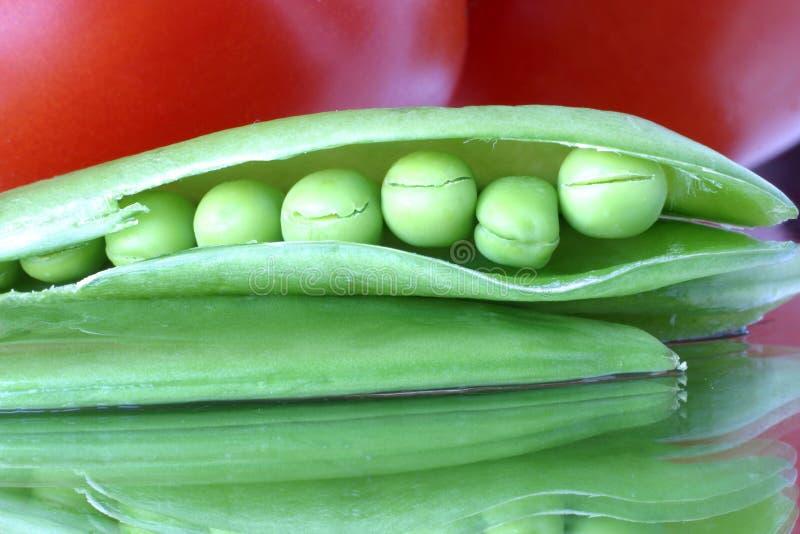 摘要接近的五颜六色的新鲜的豌豆荚下雪  图库摄影