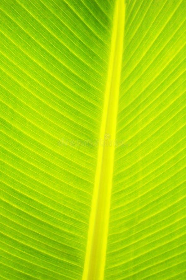 摘要接近的叶子掌上型计算机 免版税图库摄影