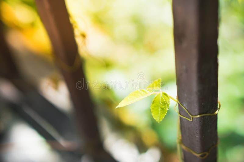摘要绿色叶子的被弄脏的本质 免版税库存照片