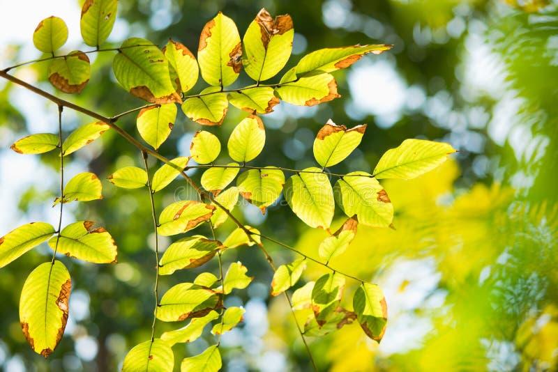 摘要绿色叶子被弄脏的自然视图  免版税库存照片